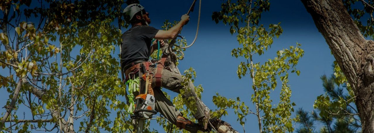 Certified Arborists & National Trust Approved Contractors